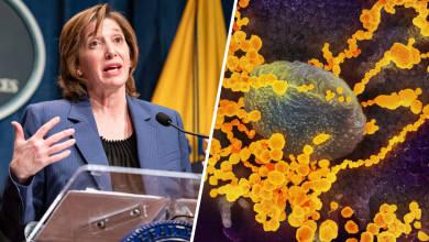 El coronavirus cuando y con que intensidad golpeara Estados Unidos