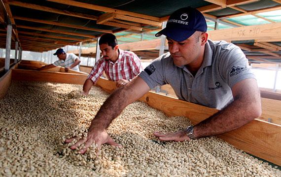 MOCCA la apuesta de Estados Unidos por el Café y Cacao peruano